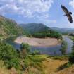 Сред дивата природа на Родопите